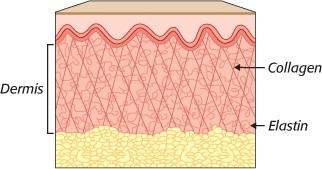 Bạn có biết dùng collagen trị sẹo và chăm sóc làn da đúng cách