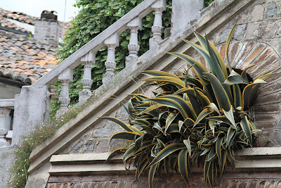 Agave and Staircase - Quito