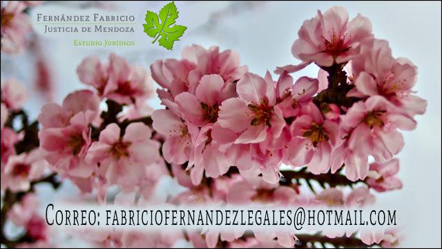 Correo Dr. Fabricio Fernandez - Mail