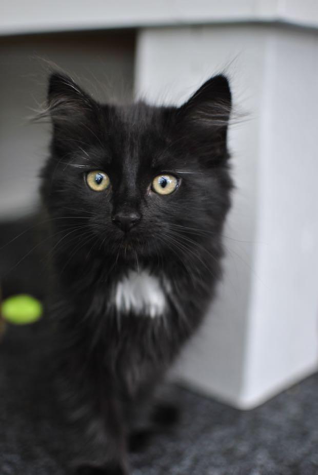 black kitten kattunge hannashantverk.blogspot.se