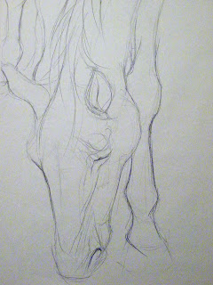 Line drawing of horse, graphite