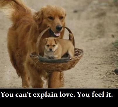 dog, cat, funny sayings, funny photos, funny pets, www.petsnmore.org