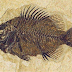 Fish is stuck for 9 million years