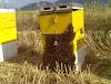 Μυστικά παλιού για αύξηση του εισοδήματος στη μελισσοκομία: Πως ένας βγάζει από 200 μελίσσια 10 τόνους μέλι, και γιατί μερικοί τα παρατάνε;