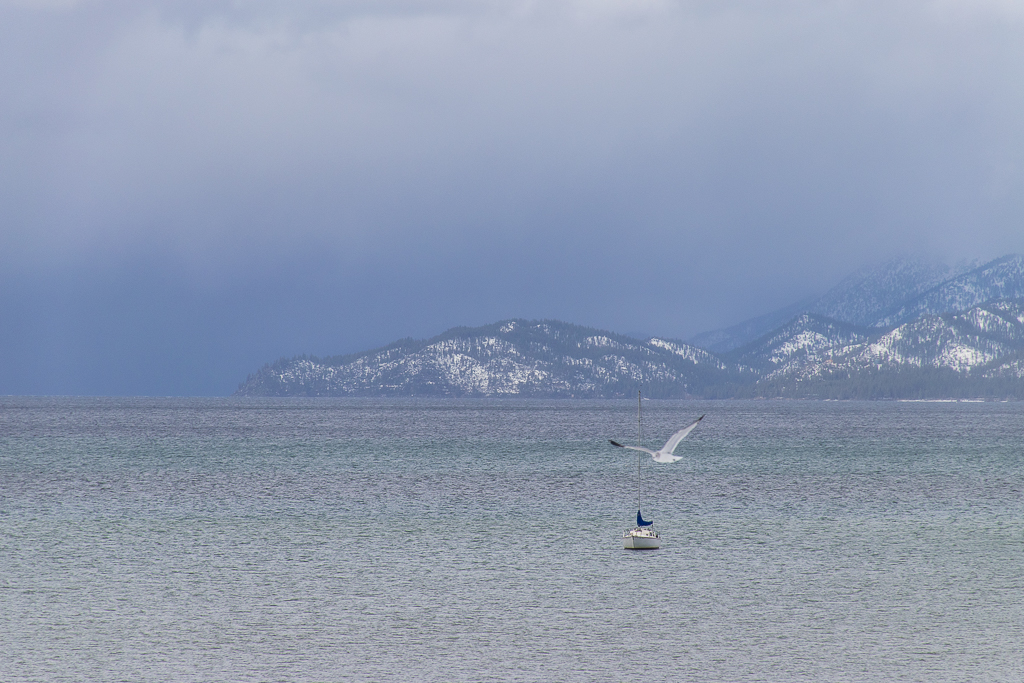 Lake tahoe scenery and birds winter landscape