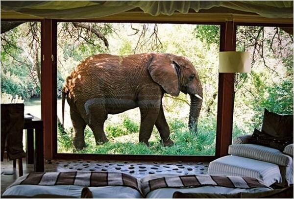 Makanyane Safari Lodge