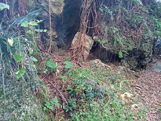 フサトモー(金満の杜)の写真