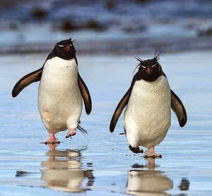Funny walking penguins joke picture