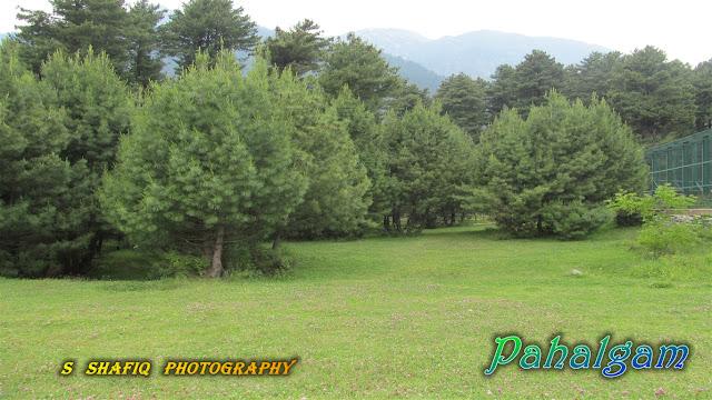 www.shafanshafiq.tk_Wallpaper_Pahalgam