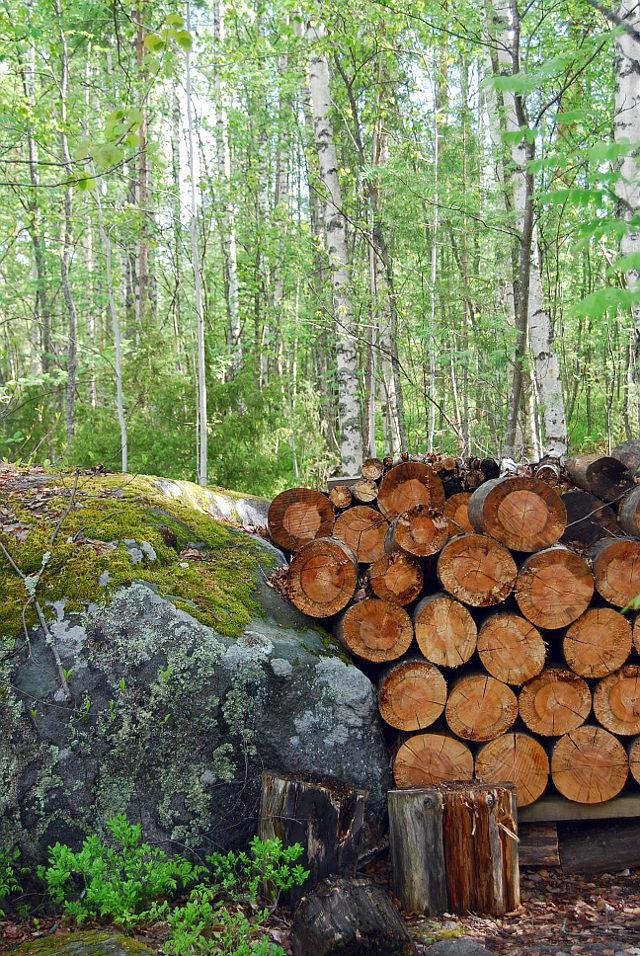 suomalainen metsä, forest, suomi, finland, keski-suomi, alvar aalto, experimental house, koetalo