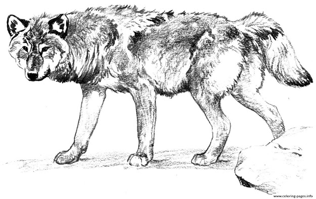 Wolf Alone Colouring Print Wolf Alone Coloring Pages