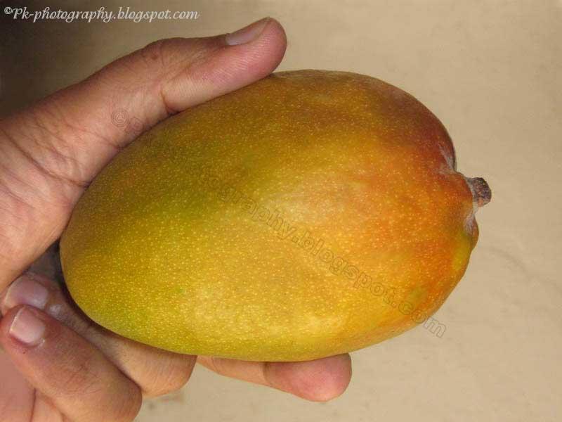 essay on mango fruit in marathi