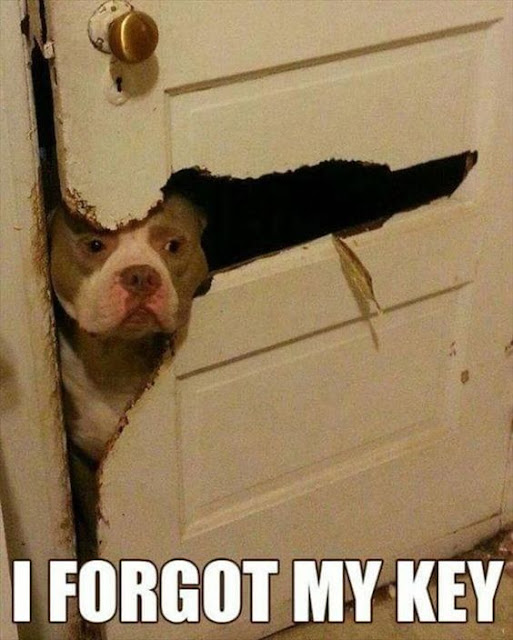 Funny dog meme - I forgot my key
