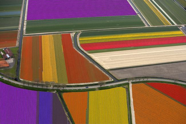 Maravilla Humana y Natural, Campos de tulipanes en Holanda 3
