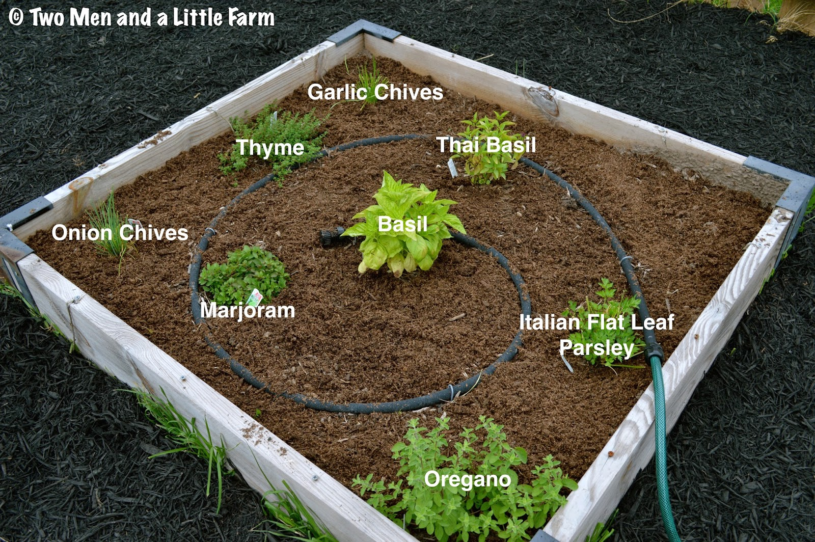 s herb bed and eggplant pepper bed l