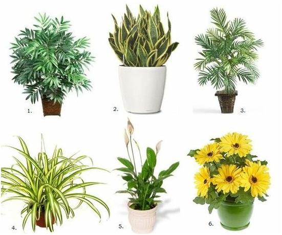 Блог вчителя біології Галушко Марини Григорівни   Кімнатні рослини a1d2c51d0b492