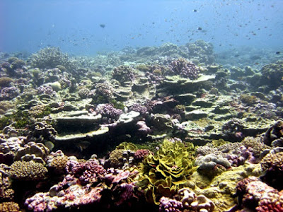 Giant coral reefs fit in with creation science Flood models.