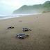 Inilah 4 Tempat Wisata Pantai di Banyuwangi Yang Sangat Terkenal di Dunia