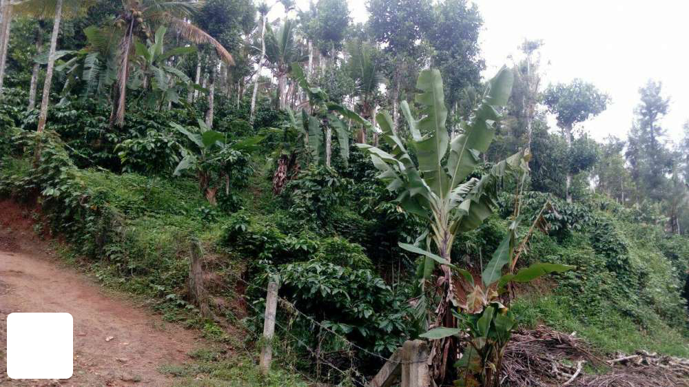 REAL ESTATE : 9 25 Acre and 3 Houses in Ambalavayal Ph