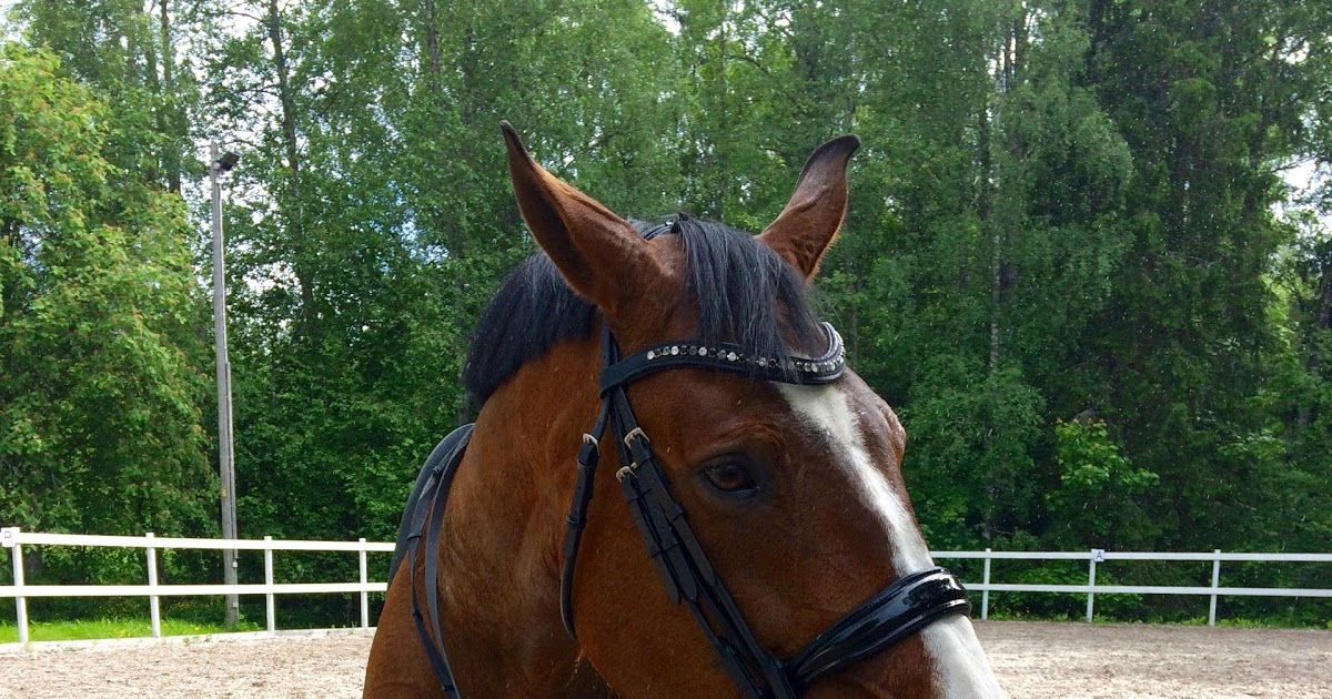 Dressage training with Jenny Eriksson: waiting hands