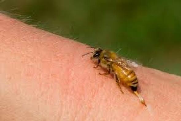 Πού πονάει περισσότερο το τσίμπημα της μέλισσας;