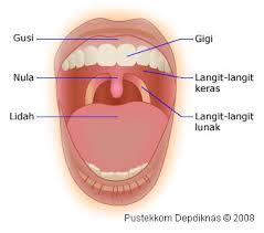 """Organ pencernaa""""mulut"""""""