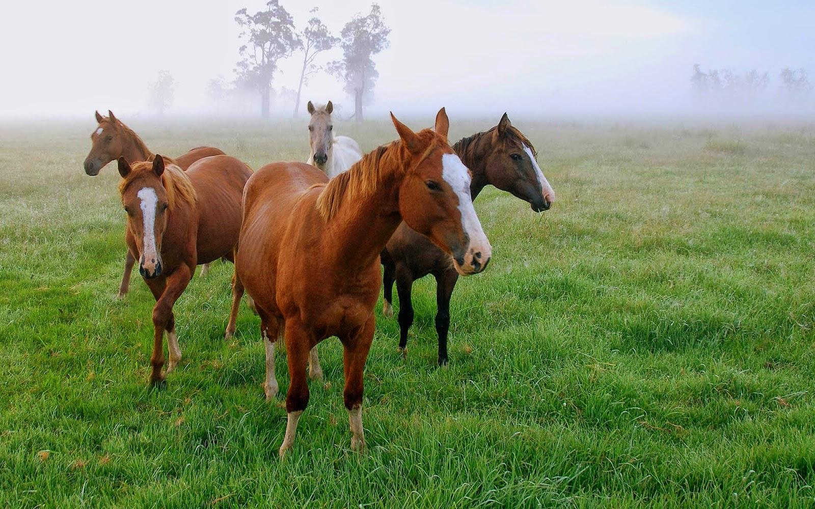 Wallpaper met paarden met mist