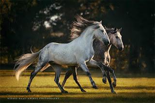 imagenes-hermosas-grandiosas-de-corceles