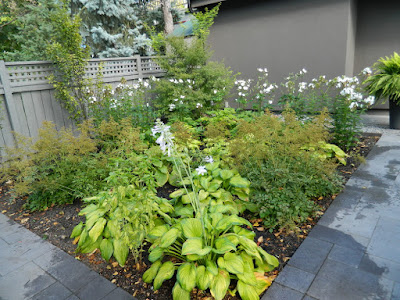 Monochromatic green garden design Danforth backyard by garden muses-not another Toronto gardening blog