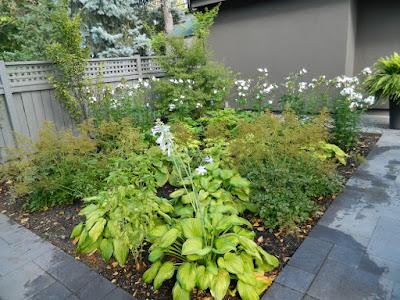 Monochromatic green garden design Danforth backyard by garden muses-not another Toronto gardening blog