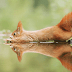28 Breathtaking Pictures Of Wild Nature Captured By Award-Winning Austrian Photographer