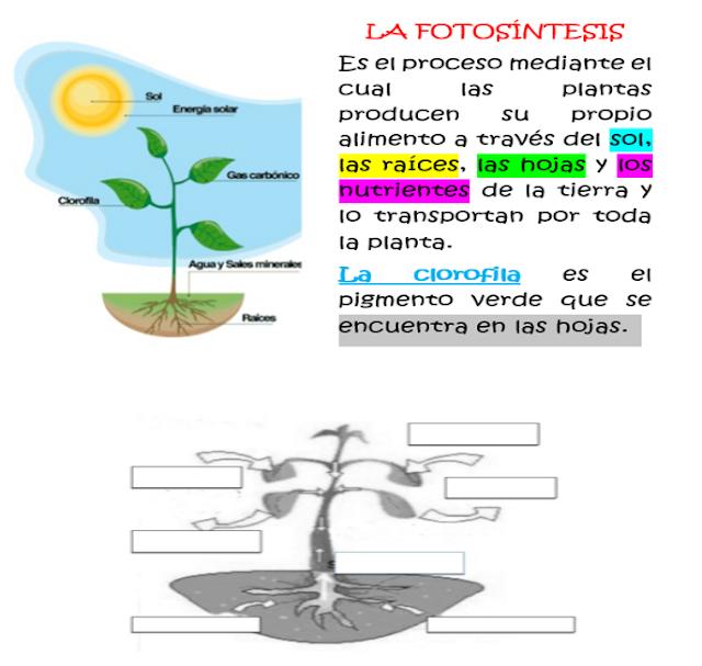 Fichas de Primaria: Ficha fotosíntesis