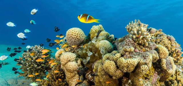 Biodiversidad y biologia