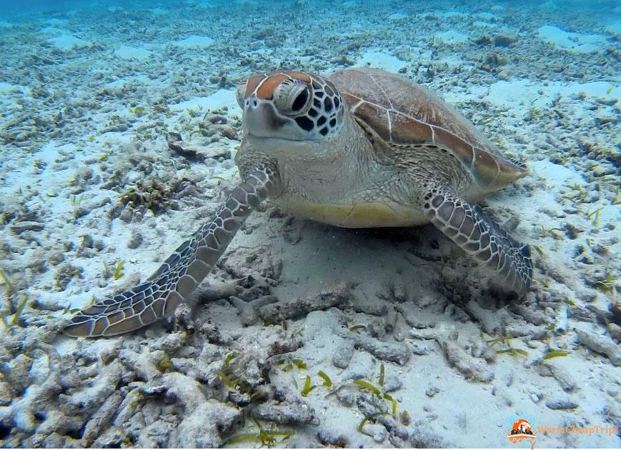 100cosedafareprimadimorire nuotare con le tartarughe a for Tartarughe marine letargo