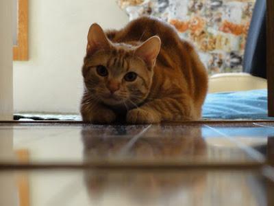猫が首をかしげてこちらを見ています。