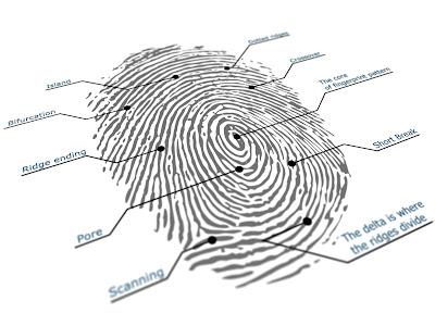 Diagrammed fingerprint illustration