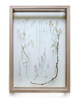 blog deco - tendance herbarium