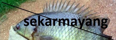 Ikan Betok Sekar Mayang