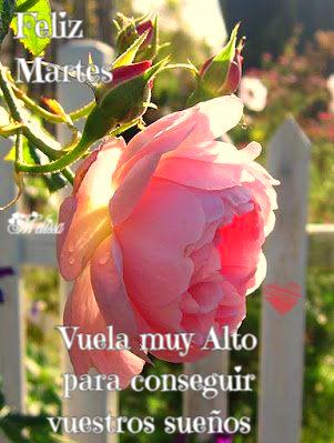 El Jardín De Las Rosas Hermosas Flores Y Frase Lindas