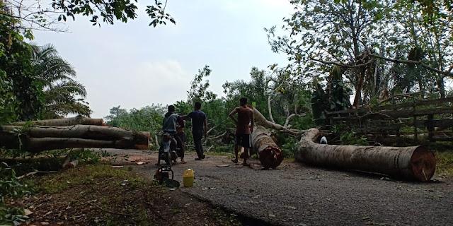 Angin Kencang Tumbangkan Pohon dan Timpa Jaringan Listrik