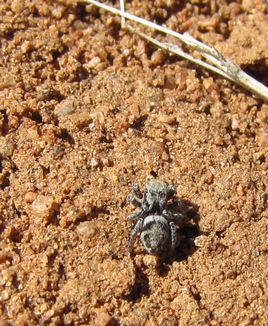 bug eric spider sunday spring spiders. Black Bedroom Furniture Sets. Home Design Ideas