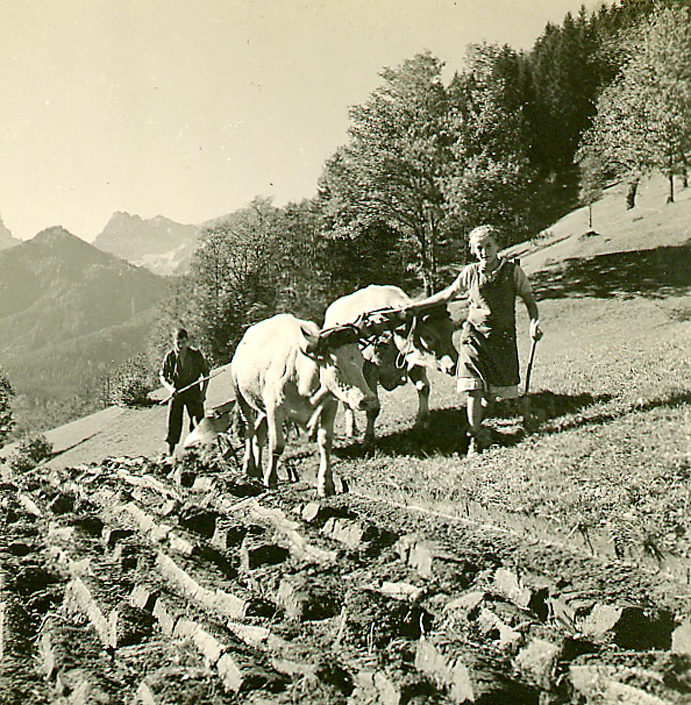 Am Bauernhof Der Träume