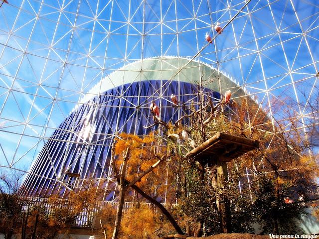 voliera Città delle Arti e delle Scienze di Valencia