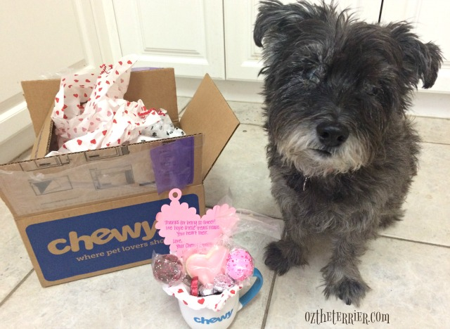 oz the terrier chewy.com influencer