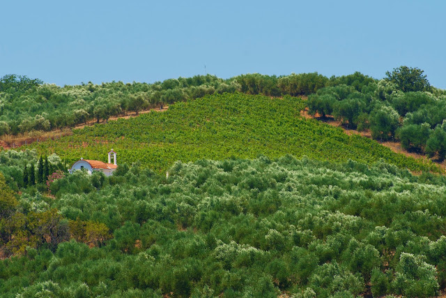 Anoskeli Vineyards Greek Wine Island of Crete