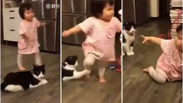 (Video) Rakaman Video Kucing Nakal Sadung Kaki Budak Kecil Buat Orang Ramai Terhibur