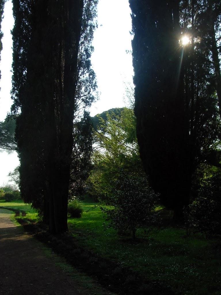 Luz através de ciprestes no Jardim de Ninfa