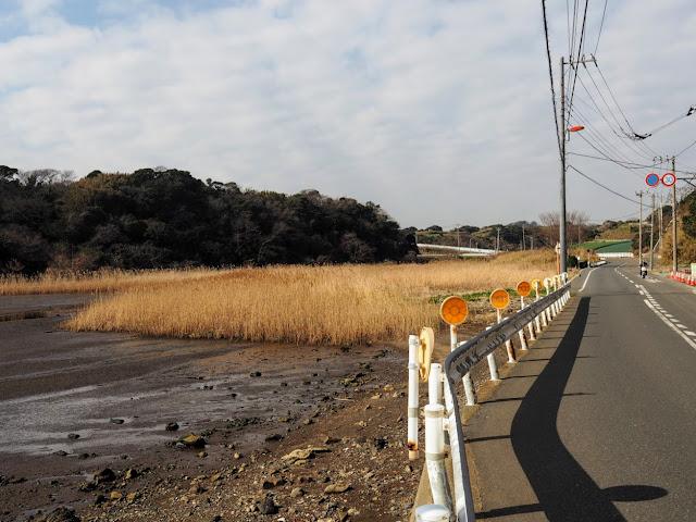 江奈湾 干潟