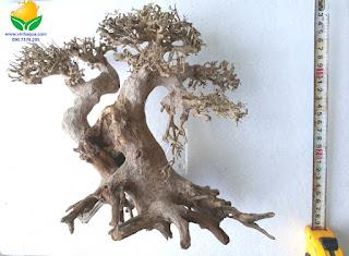 Lũa bonsai thủy sinh 3502
