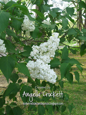 Angie Crockett's Lilac Bush